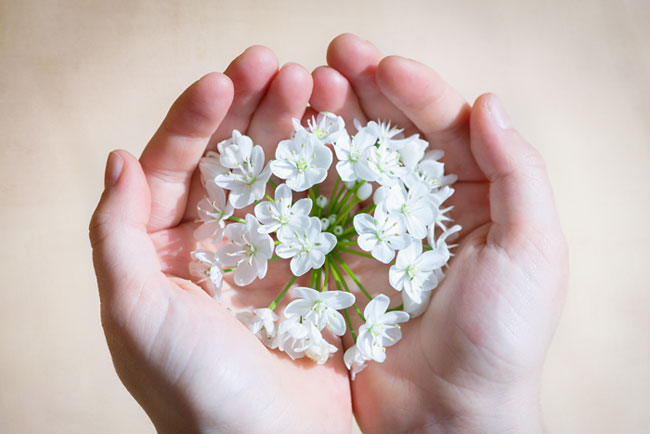 flower-blossom-bloom-white-650-435
